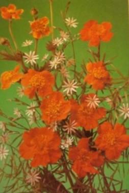 Atvirukas su gėlėmis, 1989